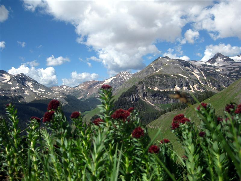 Wildflowers and Thirteen Thousand Foot Mountains