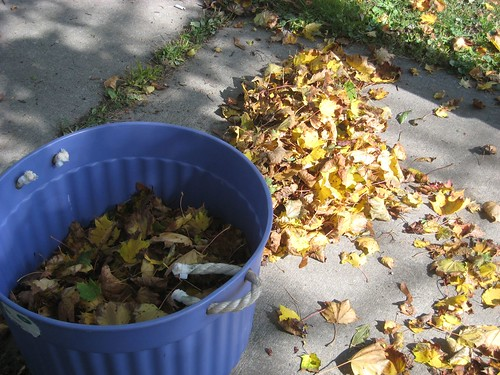 Leaf Gathering 4