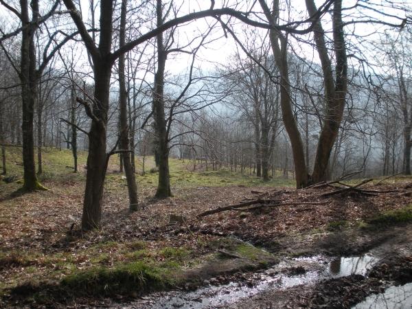 Foto 3 - Bosque en el area de Akola