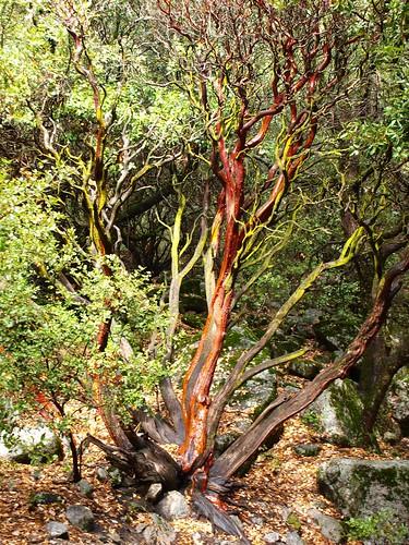 Yosemite Forest Scenes
