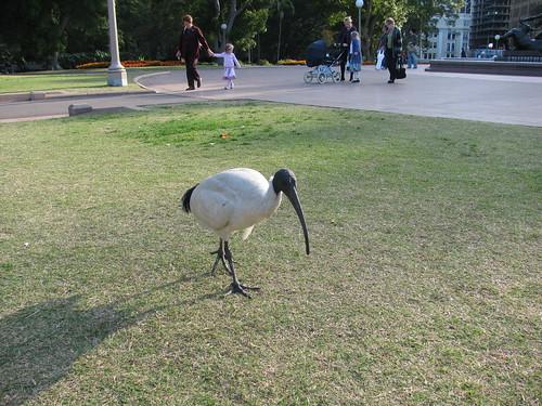 Uccello curioso!