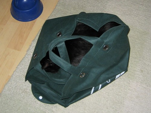 cat's still in the bag