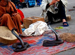 Snake Dancing, Morocco