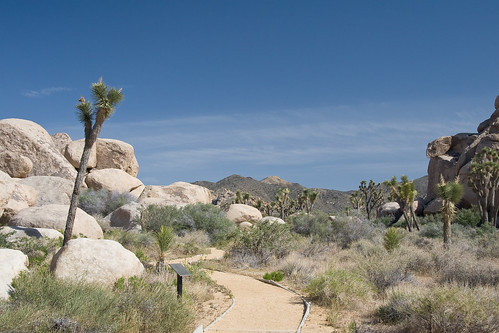 Cap Rock Nature Trail by you.