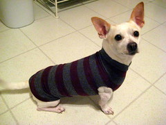 Dog Sweater - finished