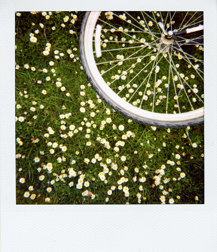 Bicycle wheel and tiny flowers (by goddess_spiral)
