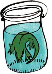 Newt in a jar