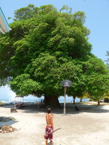 Huge shady tree on Hunting Caye, Southern Belize