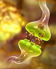 synapse-neurotransmitter
