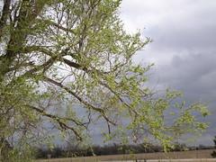spring Oklahoma sky
