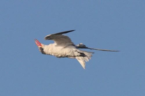 Weird flight form (by johanvrensburg)
