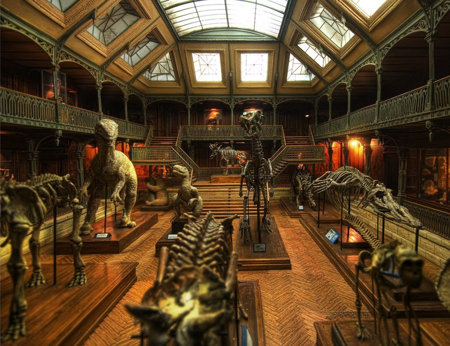 The Great Dinosaur Museum Mystery (by Stuck in Customs)