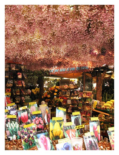 A shop selling tulip bulbs in the floating flower market by you.