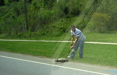Guy on the side of the road saving a GINORMOUS turtle!