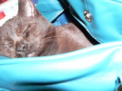Catnap in the bag