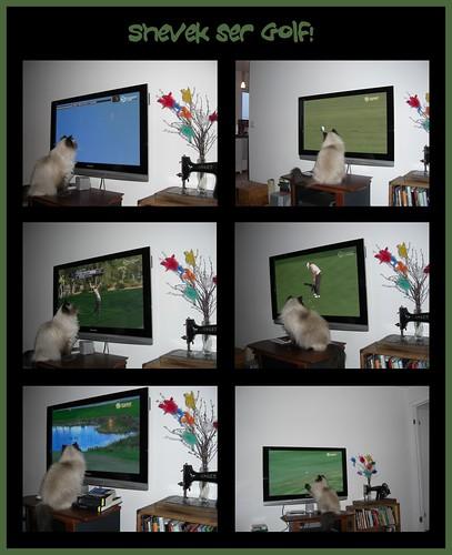 Shevek ser golf!