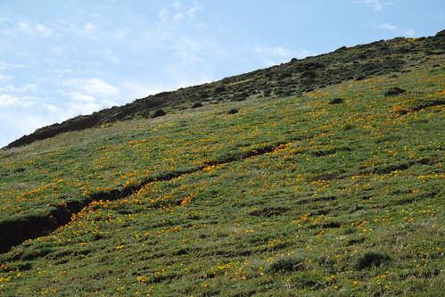 Flower-strewn hillside by you.