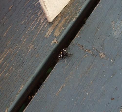 Eeek!  A Spider!