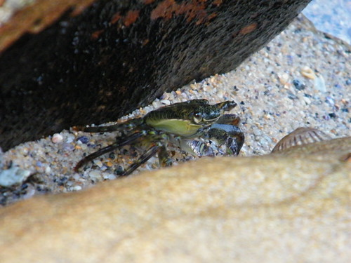Crab @ Cabbage Tree Bay