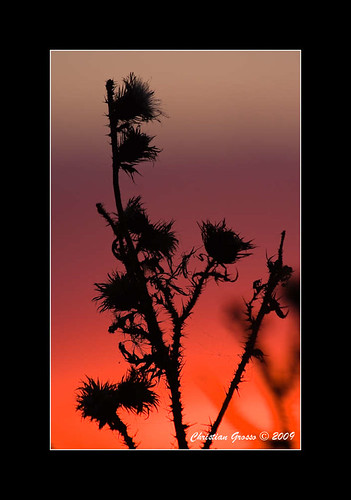 "Atardecer en el Campo • <a style=""font-size:0.8em;"" href=""http://www.flickr.com/photos/20681585@N05/3374355614/"" target=""_blank"">View on Flickr</a>"