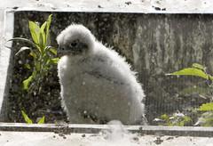Chick #1