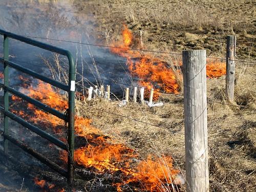 Burning Brush... by you.