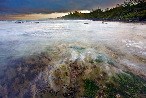 Botanical Beach Morning Glory