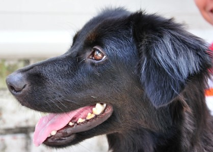 Kanly-Dog_Foster_20090404_013_DSC_0152x