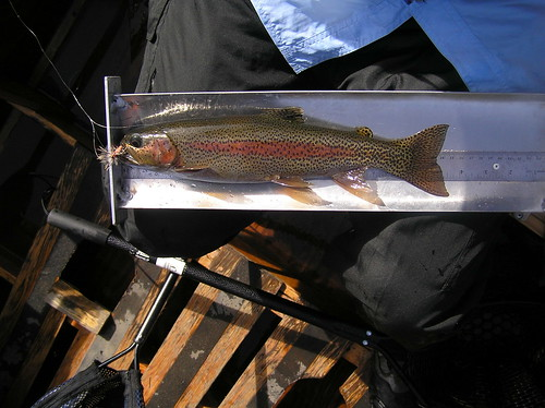 Two Fly Tournament-Mckenzie River Native Trout