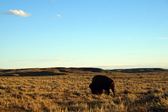 American Prairie Reserve 6