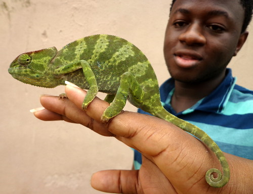 the chameleon by dotun55, on Flickr