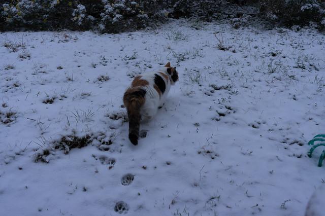 Cat & Snow
