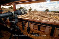 Wildlife Portugal photo hide for vultures, supported by Rewilding Europe. https://www.wildlifeportugal.pt #wildlifeportugal #hidephotography #portugal #naturetours #naturephotography #vultures #faiabravareserve #wildlifesafaris #phototours #birdwatching #