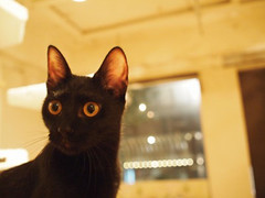 "Black cat cafe 16 • <a style=""font-size:0.8em;"" href=""http://www.flickr.com/photos/66379360@N02/10352112363/"" target=""_blank"">View on Flickr</a>"