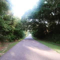 The Road Ahead. Day 84. Old Federal Rd., Shorter, AL. Have the crew from @fleetfeetmgm walking with me later, should help the last few miles pass easy. #TheWorldWalk #travel #Alabama #wwtheroadahead