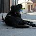 black Cerro Polanco dog 5