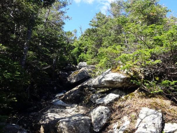 Upper North Twin Trail