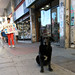 street dogs 03