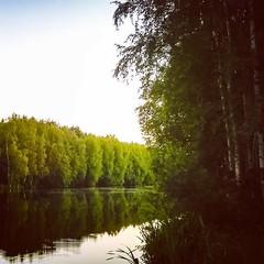 #nature #afternoon #river #trees #berezka #komenda #spb #russia