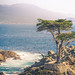 "Lone Cypress • <a style=""font-size:0.8em;"" href=""http://www.flickr.com/photos/41711332@N00/14985428229/"" target=""_blank"">View on Flickr</a>"