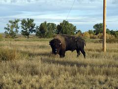 American Prairie Reserve 12