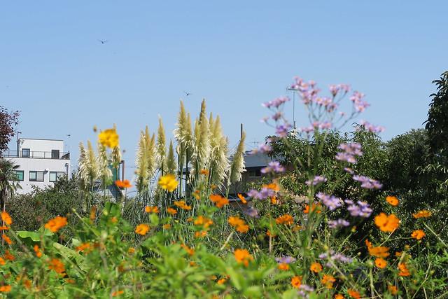 トンボと草花