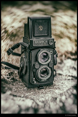 "Yashica Mat 124 G - vintage • <a style=""font-size:0.8em;"" href=""http://www.flickr.com/photos/58574596@N06/33264998955/"" target=""_blank"">View on Flickr</a>"