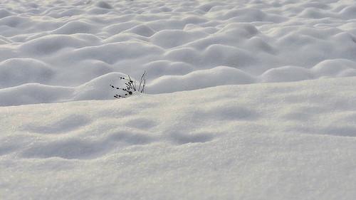 Snowy field / Havas szántóföld