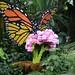 Missouri Botanical Gardens Lego Exhibit