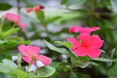 flower at Shirakawa park , Nagoya, Japan