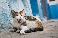 Cats at Oudayas