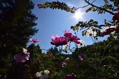 久屋大通庭園フラリエ