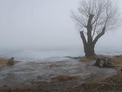 Balaton in fog 2