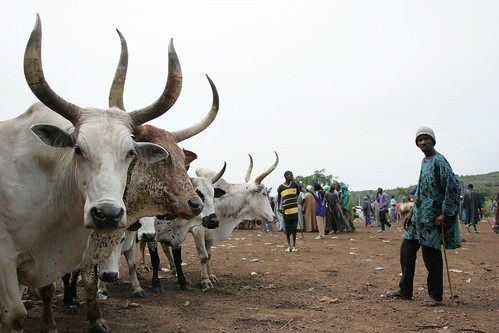 Niamana livestock market in Mali